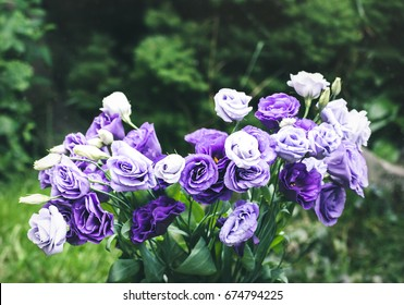 Closeup to beautiful purple and white lisianthus (tulip gentian, texas blue bell). Eustoma Grandiflorum. Bridal bouquet of white and lilac flowers of eustomas.