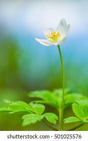 Closeup of beautiful spring flower
