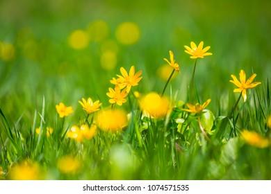 closeup beautiful spring flowers  among a green grass