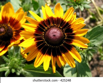 Close-up of beautiful sunflower with another one in the background
