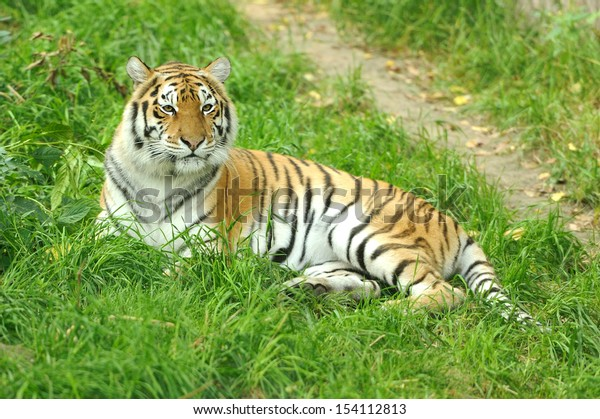 Close-up beautiful tiger in grass