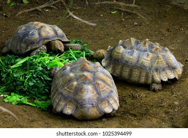 Close-up: beautiful turtle
