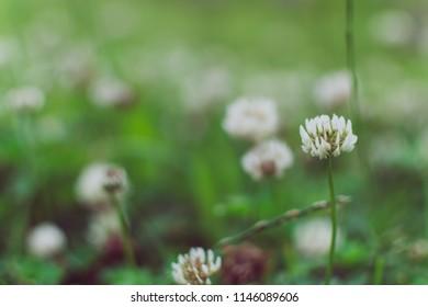 Closeup beautiful white flower