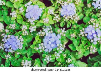Closeup beautiful white and purple flower