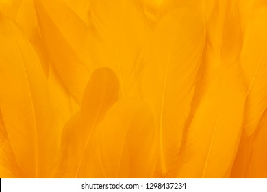 Close-up of beautiful yellow feathers. Color the background