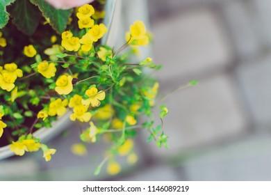 Closeup beautiful yellow flower