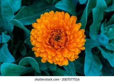 Nahaufnahme einer schönen gelben Blume