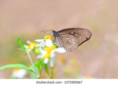 A close-up of Beauty  butterflys resting in nature