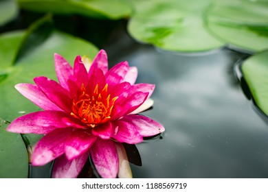 Lotus flower images stock photos vectors shutterstock a close up with the beauty of the lotus mightylinksfo