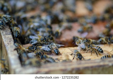 A closeup of bee colony in the hive, when a beekeeper is opening the hive to harvest and collect honey with a shallow depth of field