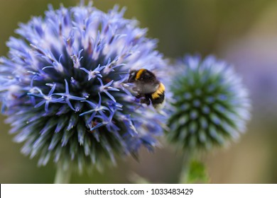 A closeup of a bee getting some pollen from a beautiful flower