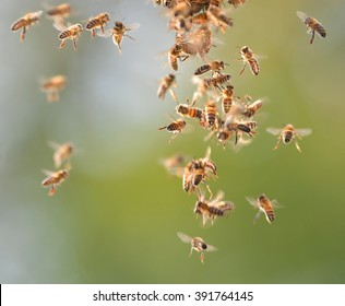 Closeup of bees flying in apiary