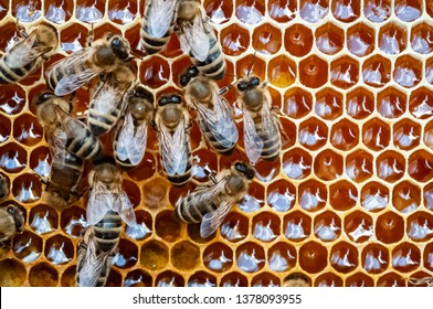 Closeup of bees on the honeycomb in beehive, apiary, selective focus