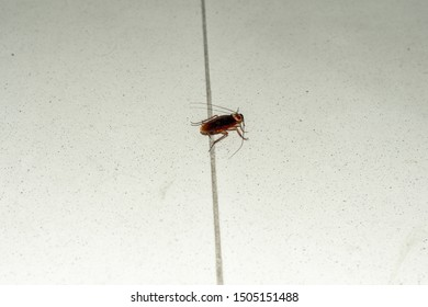 Closeup of a big cockroach, running on floor