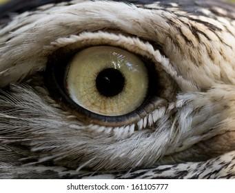 Close-up of a Bird eye