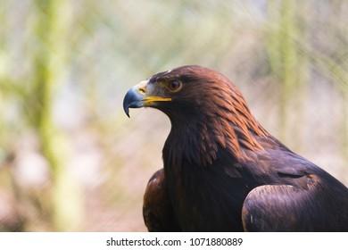 closeup of a bird of prey in an animal park