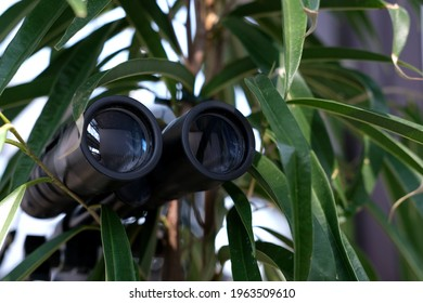 closeup of black binoculars spying from the bushes, spying on unfaithful husband, neighbors, secrets, observation of people and animals