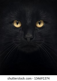 Close-up of a Black Cat looking at the camera, isolated on white