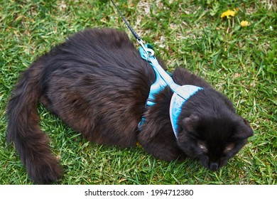 Close-up of a black cat sitting on the grass