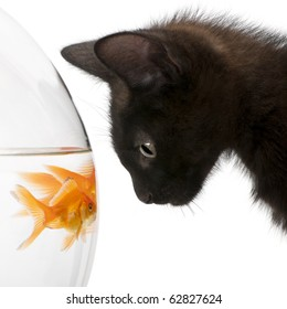 Close-up of Black kitten looking at Goldfish, Carassius Auratus, swimming in fish bowl in front of white background