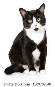 Close-up of a black and white house cat. Animal themes