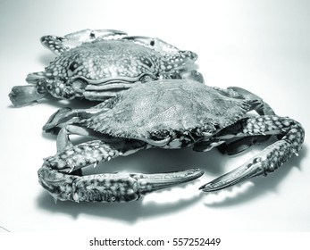 Close-up black and white photo of fresh raw flower crabs (Portunus pelagicus) also known as blue swimming sea crabs, famously fresh seafood in the market.