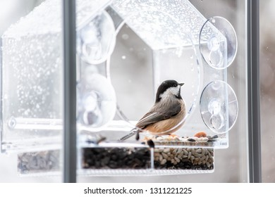 Closeup of black-capped or carolina chickadee bird perched on plastic glass window feeder looking during winter snow or rain in Virginia with seeds