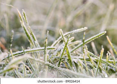 Closeup of blades of grass covered with rime