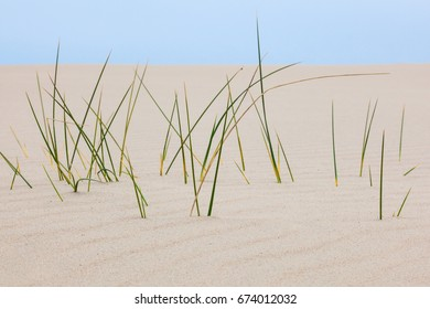 Closeup of blades of grass in the sand