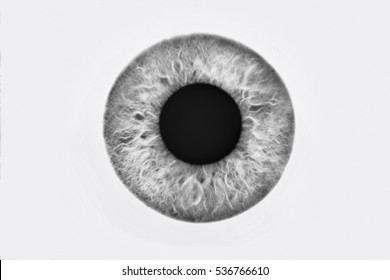 Closeup of blue eyeball on white background