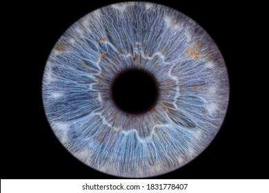 Close-up of the blue green human Iris / Eye (Macro Photography)