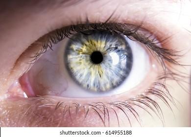 Close-up of blue human eye