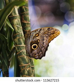 Close-up blue morpho butterfly sitting in plants/Blue Morpho Butterfly/Blue Morpho Butterfly