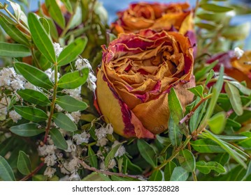 Close-up of a bouquet of dried roses and various complementary plants.