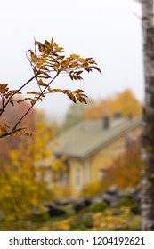 A close-up of branch with yellow leaves with colorful trees and a wooden house in the background