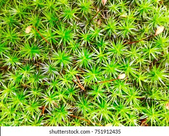 closeup of a bright green colored moss growing on a forest ground/humidity and moist in the wood/pattern, structures and textures in the nature