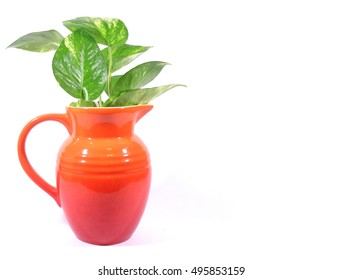 Close-up of bright orange jug with green leaves isolated on white background