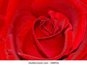 Close-up of bright red rose