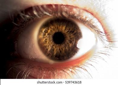 Close-up of brown human eye