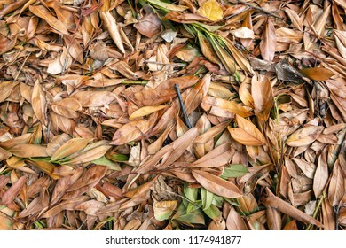 Closeup of brown and orange colored oblong leaves and small twigs together on large heap. The organic material will digest and compost soon and then form food for the trees in the neighborhood.