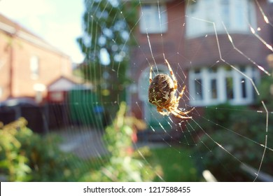 Closeup brown orb spider on wide cobweb in front garden, one side of frame. Sun light shines on spider body & some webs. Space to add text on blurry web, green bush tree, driveway, house in background