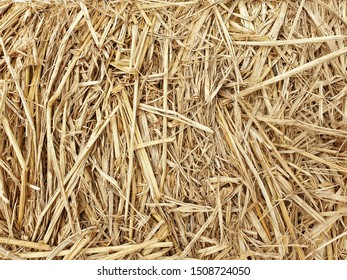 Closeup brown rice straw. texture and background.