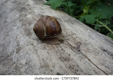 Close-up of a brown snail on a bright tree trunk.