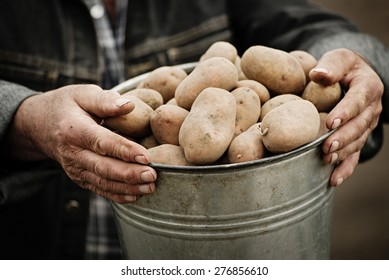 Closeup of a bucket of potatoes in the hands of the farmer