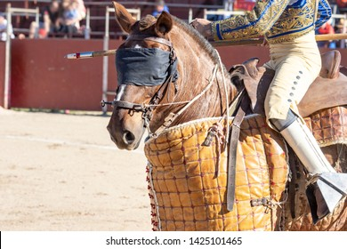 close-up of bullfighter horse in the square