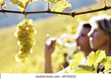 Close-up of bunch of green grapes hanging from vine in vineyard with blurred woman and man (couple) in background holding glasses for wine tasting.