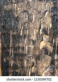 Closeup of burned oak wood with rough texture as background.