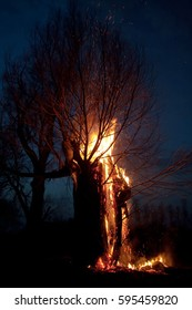 closeup of burning trees in the night forest