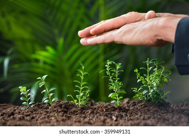 Closeup of businessman's hands protecting plants growing on land