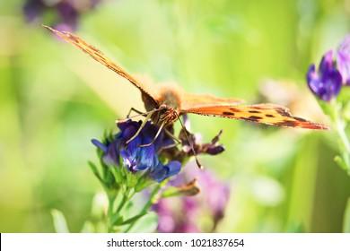 Closeup of a butterflies proboscis feeding on a flower